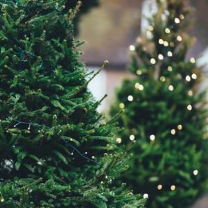 Karácsonyfa-kalauz: így válassz fát a zöld ünnepekért
