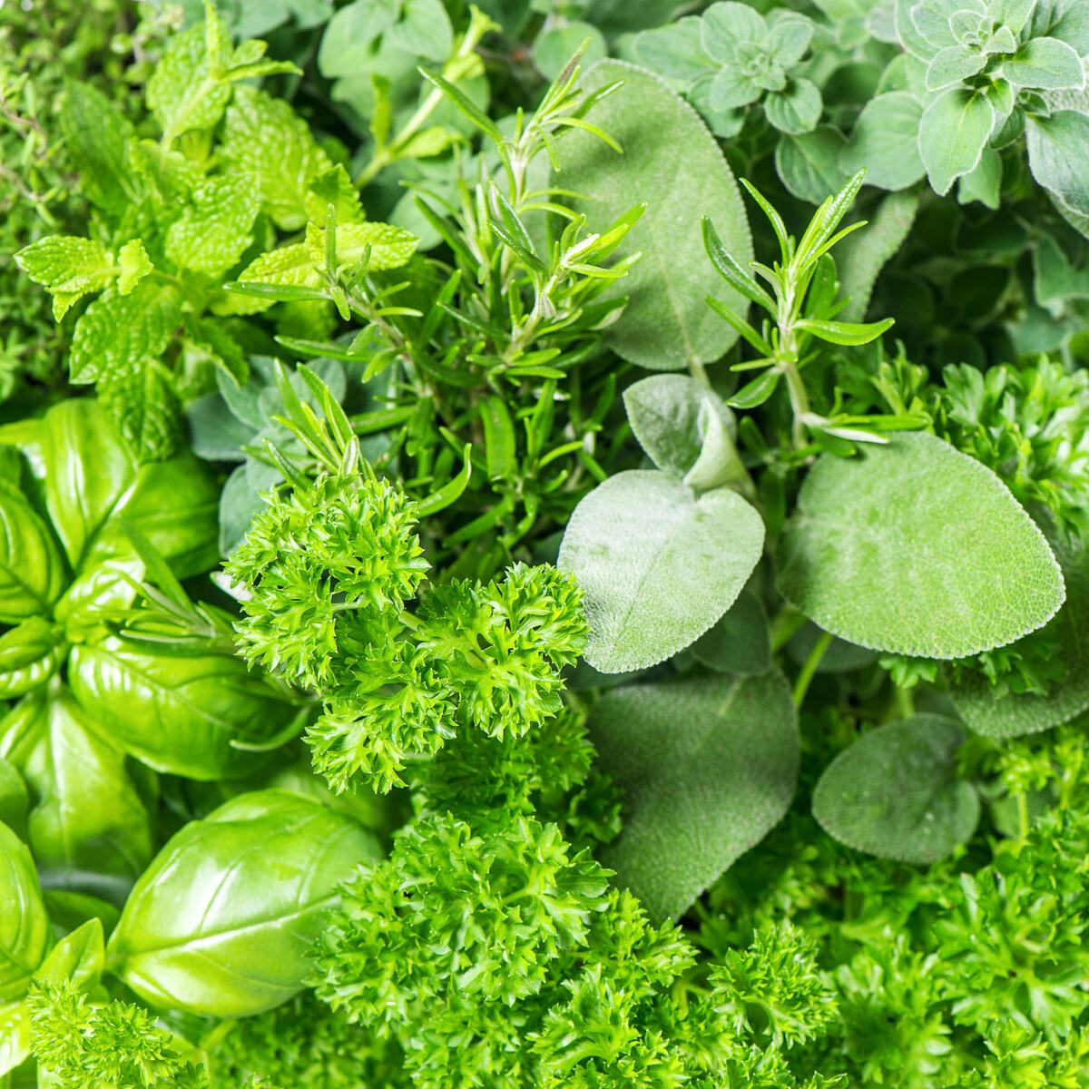 Íme a filléres és praktikus függő fűszernövénykert, ami egy icipici balkonon is elfér