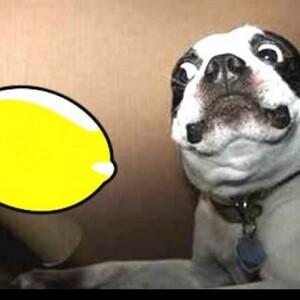 Citrom és kutya találkozása - cuki videón