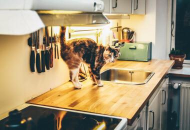 Így rakj rendet percek alatt a mosogatóban és környékén
