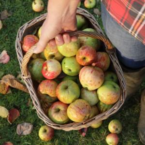 Így hosszabbítsd meg az almáid élettartamát