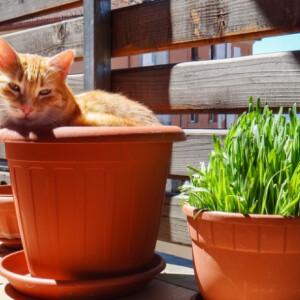 Növessz saját gyógyszertárat az erkélyeden – ezeket a gyógynövényeket termeszd otthon!