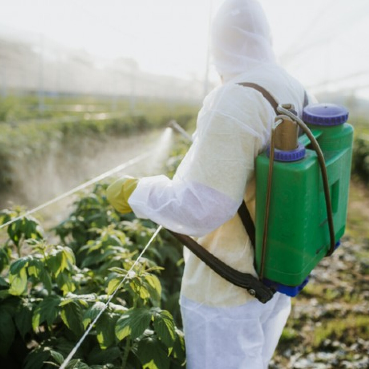 Tényleg veszélyesek a permetezett gyümölcsök? Válaszol a NÉBIH