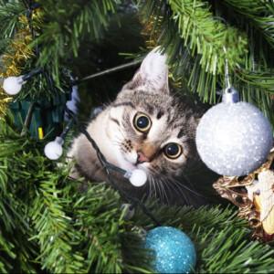 Félsz, hogy a gyerek vagy a háziállat felborítja a karácsonyfát? - Itt a szuper biztonságos, magas műfenyő!