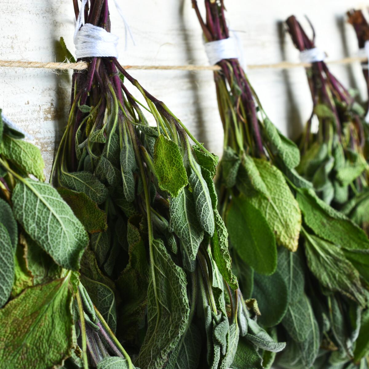 Így szárítsd meg a zöldfűszereket, hogy tele legyen ízekkel a konyhád