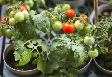 Több kellemes mellékhatása is van, ha nekiállsz otthon kertészkedni