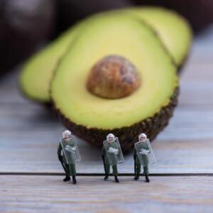 """Emberi életekbe kerül a """"szupergyümölcs"""" termesztése - ezért ne egyél avokádót"""