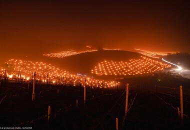 Ilyet még nem láttál, gyönyörű és félelmetes, ahogy a franciák a szőlőt védik