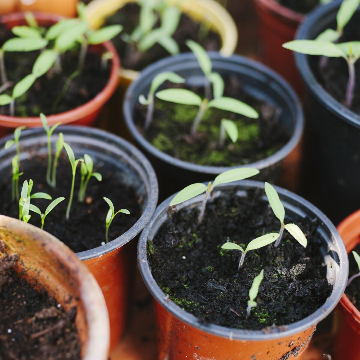 Ezeket a zöldségeket és virágokat ültessük áprilisban