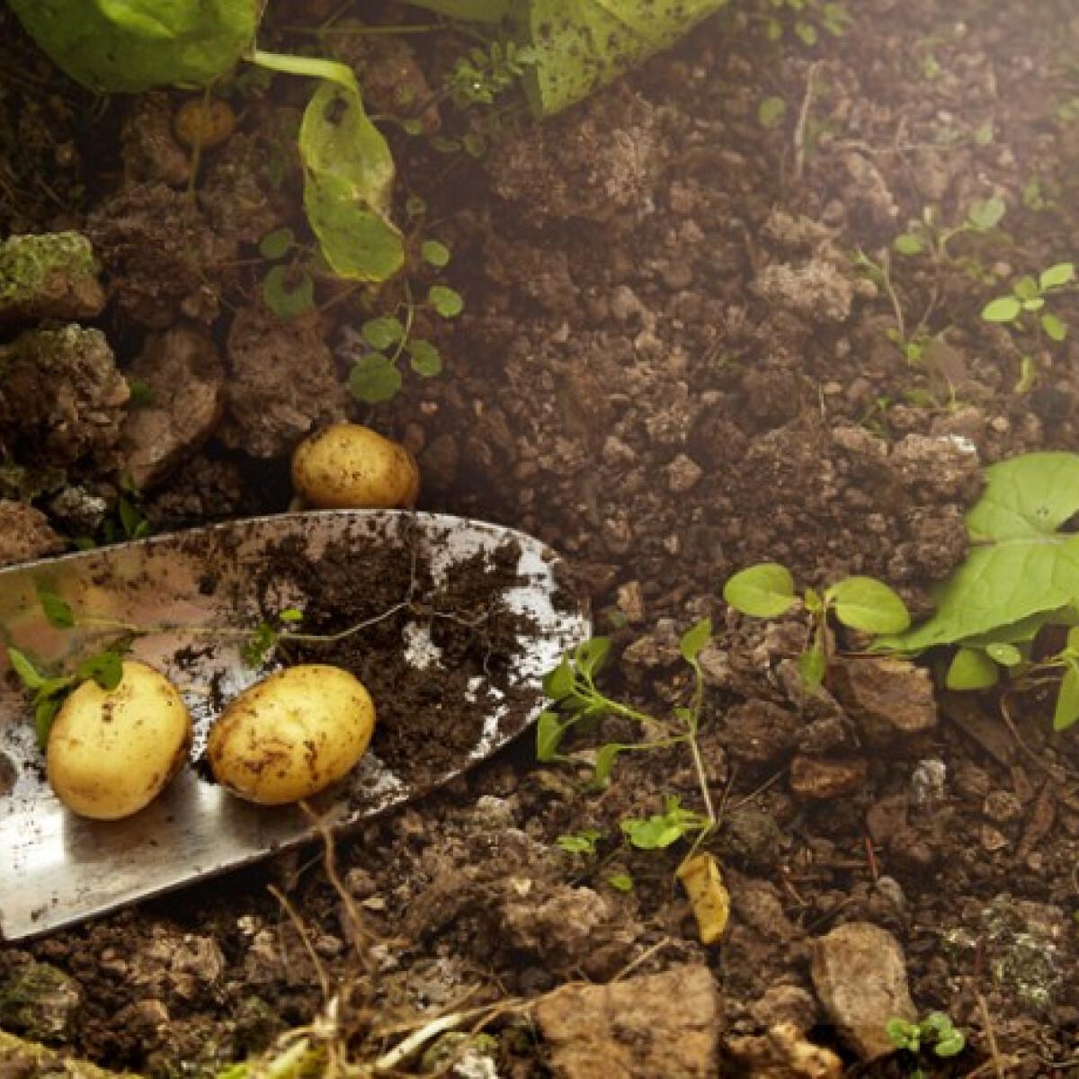 Tavasz a konyhakertben: így vesd el a zöldségeket, ha mielőbb bő termést szeretnél