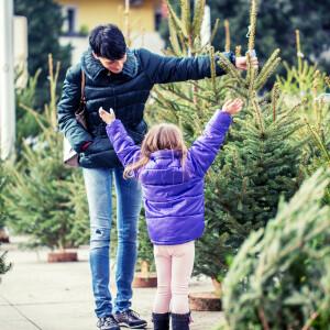Rossz hír érkezett az idei karácsonyi fenyőfákkal kapcsolatban