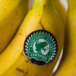 """5 címke, amiben bízhatsz, ha ezt látod egy """"elvileg"""" környezettudatos terméken"""