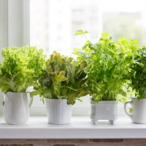 Így neveld a fűszernövényedet - használd ki az erkélyt, gangot, ablakpárkányt