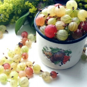 Egres, köszméte, piszke: a pompás savanykás gyümölcs élettani hatásai + receptek