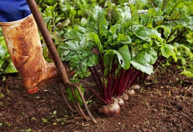 Nosalty-kvíz: Kitalálod a levelek, szárak alapján, milyen zöldség van a képen?