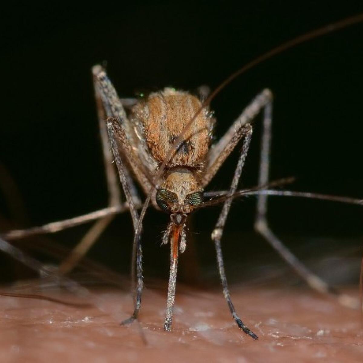 5 trükk, amivel elűzheted magadról a szúnyogokat