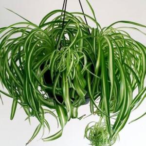 Ezeket a légtisztító növényeket szerezd be az otthonodba!