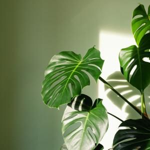 7 szobanövény, ami még az irodai elhanyagoltságot is bírja