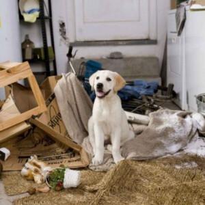 6 okos trükk, amivel még akkor is tisztaság lehet az otthonodban, ha kutyád van