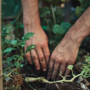Használj teljesen természetes és filléres növényvédő szereket a kertben
