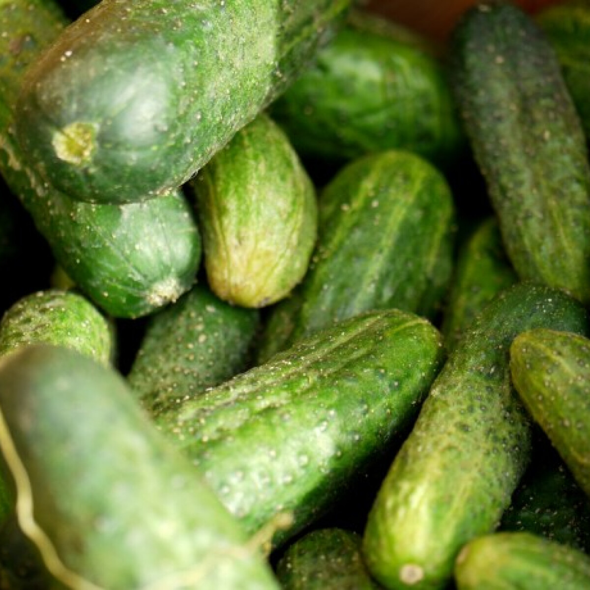 Tippek a jó kovászos uborkához