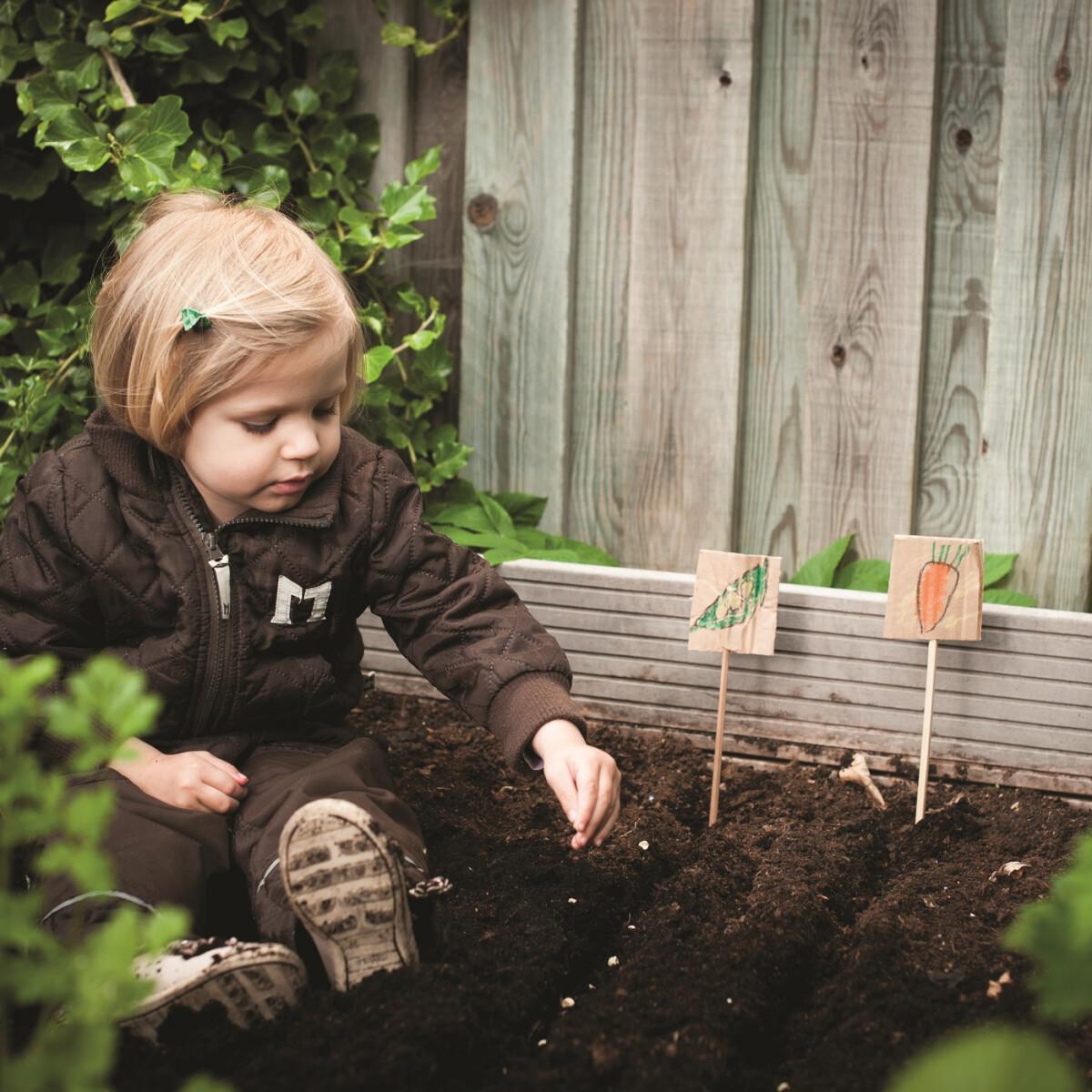 Ezeket a növényeket ápold és ültesd el most, hogy gyönyörű legyen a kerted tavasszal