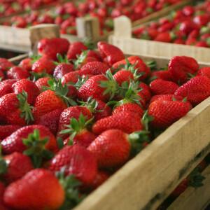 6+1 megbízható hely, ahonnan magyar termelői epret rendelhetsz