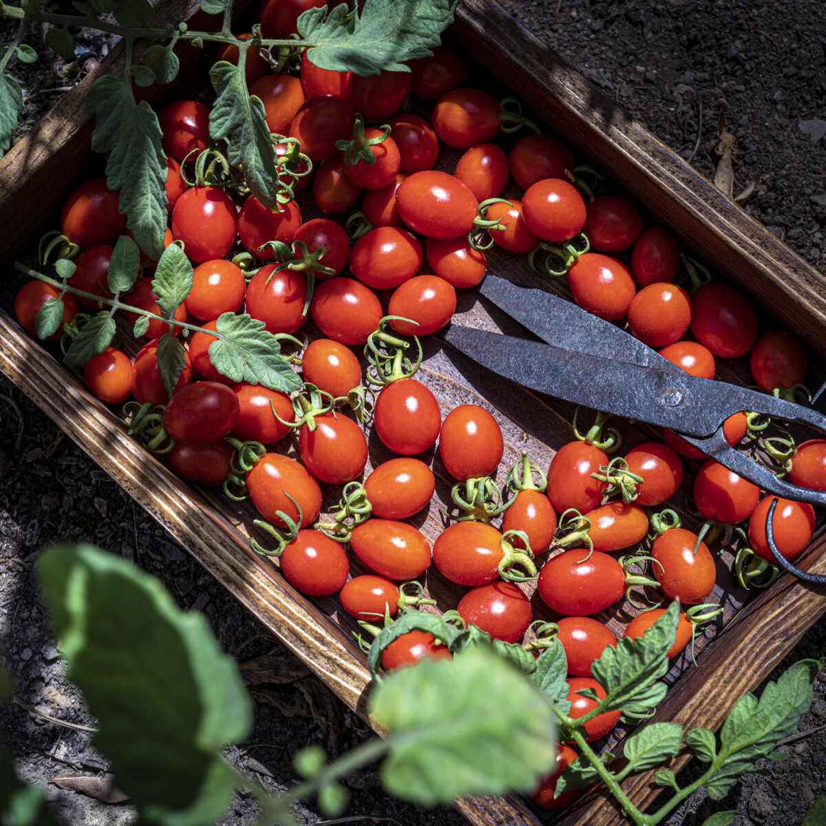 Ezek a legfontosabb júniusi kerti munkálatok, ha még ősszel is szép udvart akarsz