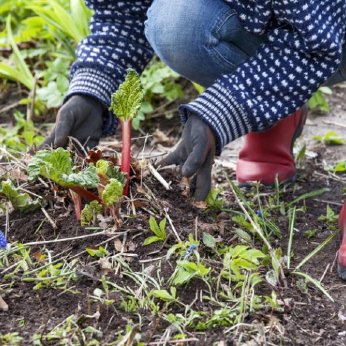 Ezeket a kerti munkákat érdemes még most elvégezned a konyhakertben és a virágoskertben