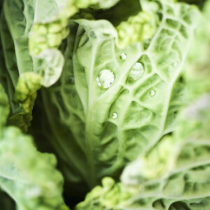 KELKÁPOSZTA: a tipikus 'nemszeretem' zöldség, amit így még a gyerekekkel is megkedveltetsz