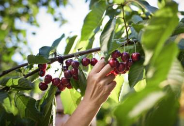 Kiderült, mennyivel fognak még drágulni idén a nyári gyümölcsök