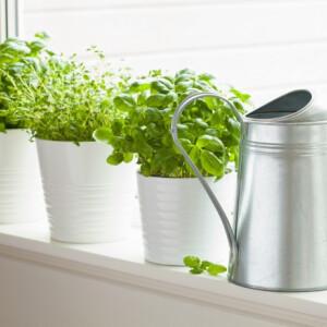 5 fűszernövény, ami megterem a konyhádban is