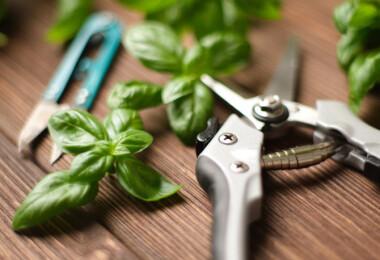 Fűszerkert – elmondjuk, miért és hogyan kell metszeni a friss fűszernövényeket!