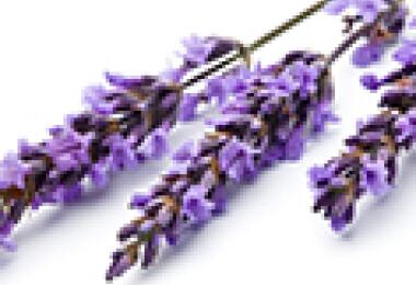 gyógynövények, virágok