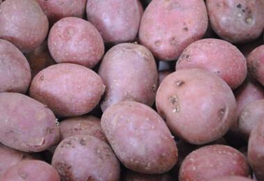 Parázskrumpli