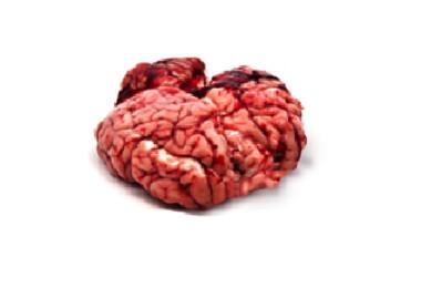 Sertés agyvelő
