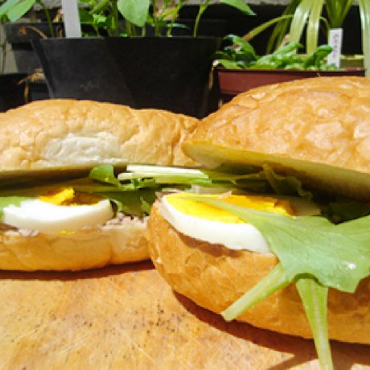 Ezen a képen: Tonhalas szendvics