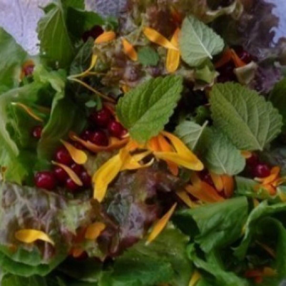 Ezen a képen: Kerti parti saláta