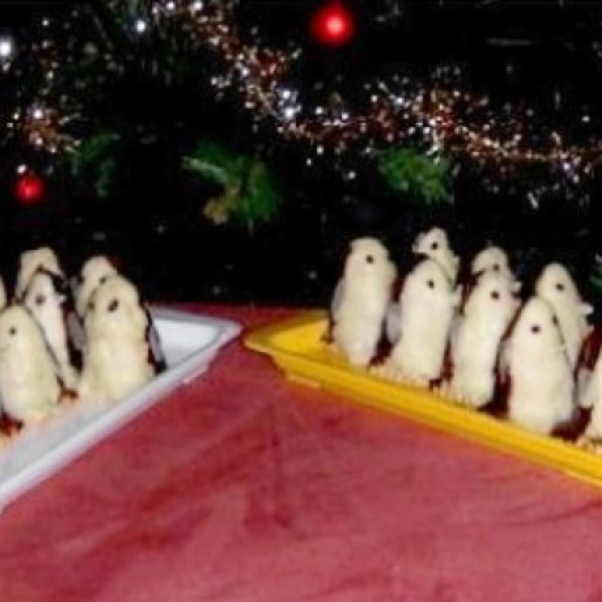 Pingvinek